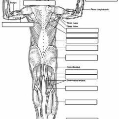 Muscle Diagram Dorsal 1988 36v Club Car Wiring Human Muscles Labeling Side Label The Of Body