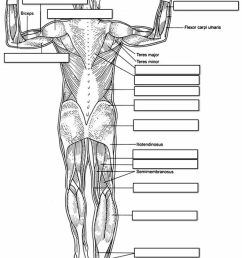 label the muscles of the body dorsal side [ 790 x 1108 Pixel ]