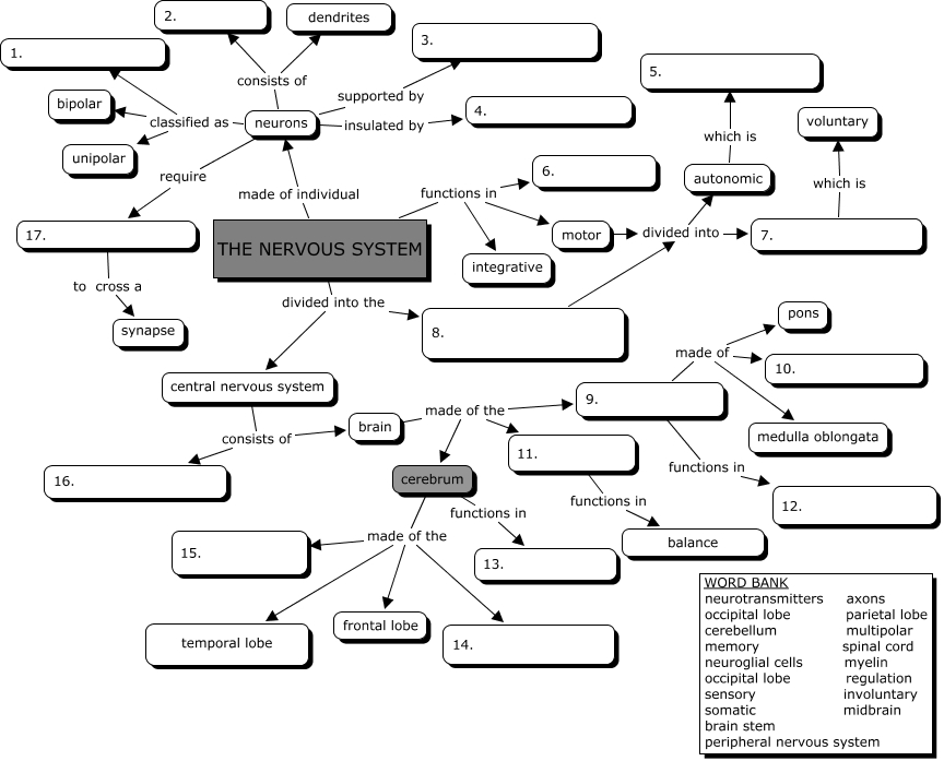 Nervous System Concept Map Answers