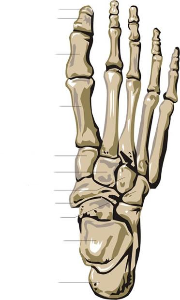 bones human skeleton diagram central boiler thermostat wiring body -