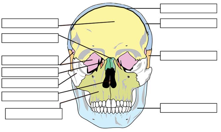 label the eye diagram answers 1976 corvette alternator wiring skull all data anatomy labeled bones of skullanatomy