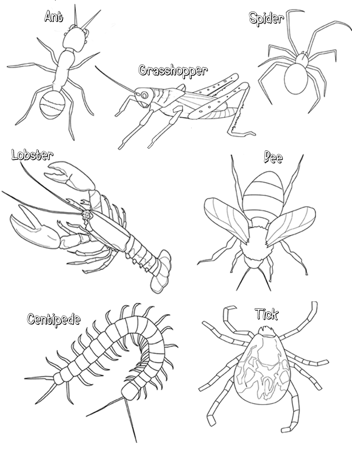 Arthropod Coloring