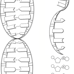 Blank Dna Diagram Redarc Bcdc1240 Wiring - The Double Helix, Coloring Worksheet