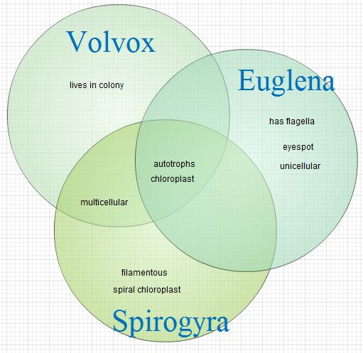 euglena cell diagram with labels rj45 b wiring untitled document venn