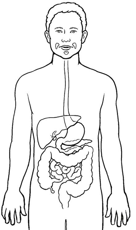 Digestive System Coloring