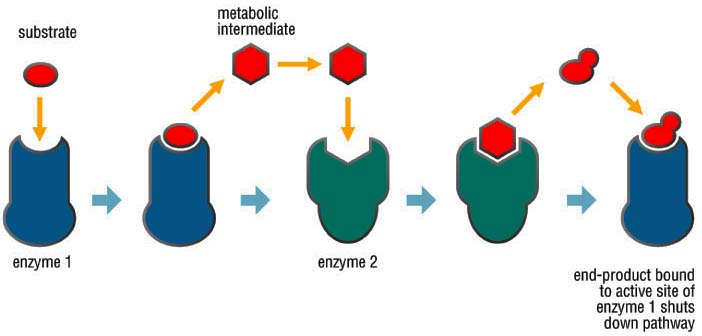 Yzing Graphics Enzymes