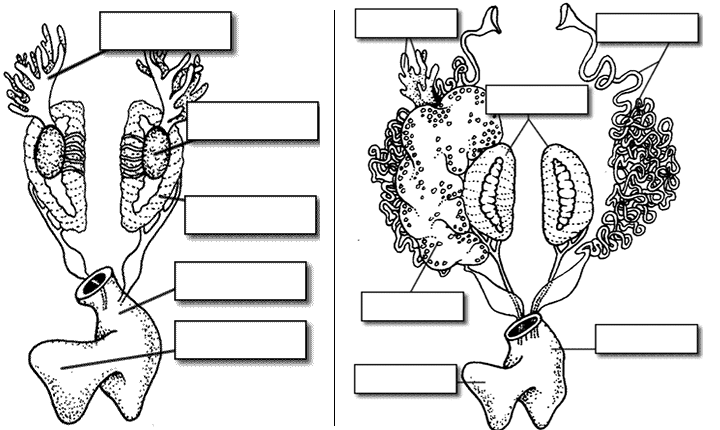 Wiring Diagram: 29 Frog Dissection Diagram Labeled Worksheet
