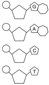 Printables. Dna Worksheet. Lemonlilyfestival Worksheets