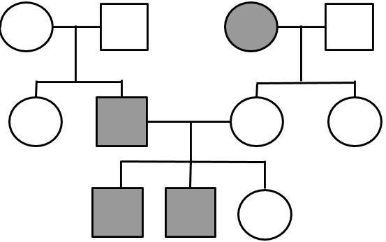 Analyzing Human Pedigrees