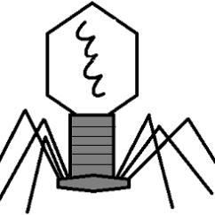 Virus Diagram Worksheet Century Ac Motor Ao Smith Wiring Viruses Notes Types Of