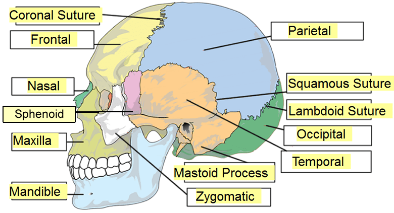 label the eye diagram answers for wiring a 3 way switch skull all data labeling animal