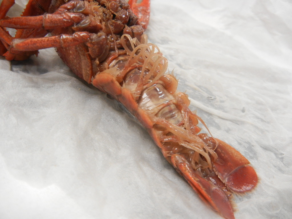 Anatomy Of A Crayfish Virtual