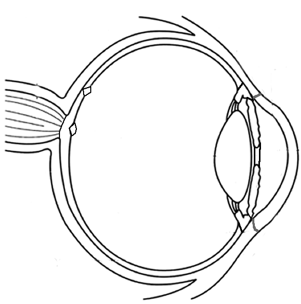 Eye Diagram Worksheet, Eye, Free Engine Image For User