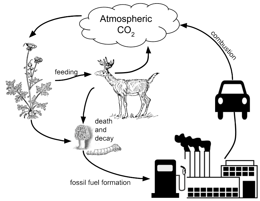 Analyzing Graphics: The Carbon Cycle