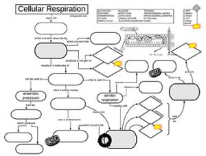 Cellular Respiration Graphic