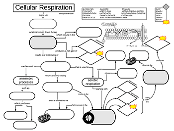 Cellular Respiration Graphic