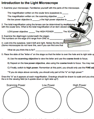 Introduction to the Light Microscope