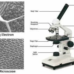 Sheep Brain Diagram Biology Corner 2008 Ford E350 Radio Wiring Microscope The