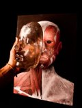 Arts biomedical science glass face