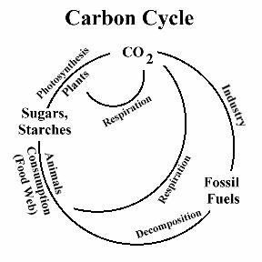How is tree formed? (Carbon Cycle)