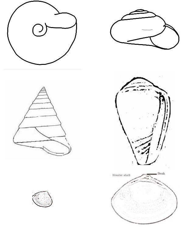 Lesson on Molluscs « Biology Education