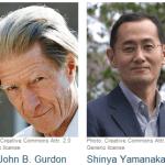 Βραβείο Νόμπελ 2012 – Βλαστοκύτταρα