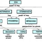 Δημιουργία Δυναμικών Εννοιολογικών Χαρτών στη Βιολογία