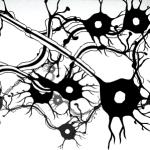 Νευρική ώση: ανακαλύψεις από το 1906 έως σήμερα