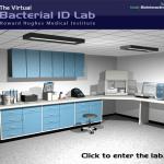 Βακτηριακή ταυτοποίηση: εικονικό εργαστήριο
