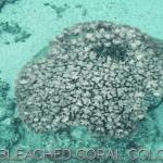 Βίντεο: κοράλλια – φύκη σε συμβίωση