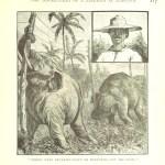 Φωτογραφική συλλογή ειδών υπό εξαφάνιση