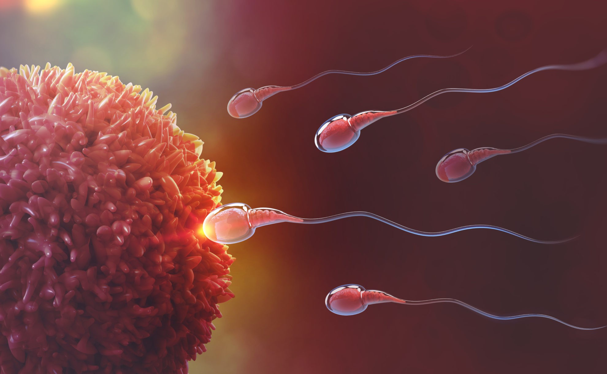 Human Reproduction And Fertilization