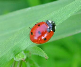 Lucha contra las plagas: usos de escudo biológico