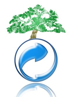 7 Productos básicos para una alimentación ecológica