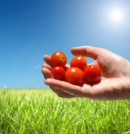 Ciclo de vida en la tecnológia de los alimentos