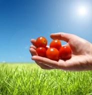 Agricultura ecológica en Aragón