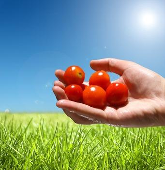Promoción de Alimentos Ecológicos