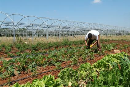 Agricultura ecológica en Las Cinco Villas