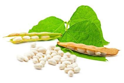 Lecitina de soja para el Cerebro, Corazón y Obesidad