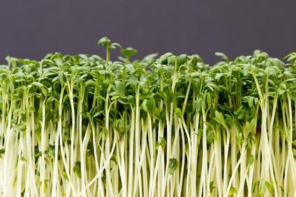 Germinados, alimentos para tu salud