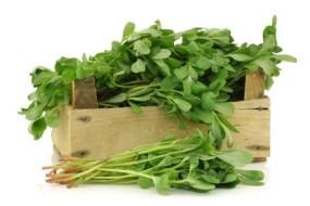 Las Verdolagas de Maleza a Vegetal Nutritivo