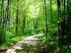El hombre que plantó árboles y creció la Felicidad
