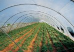 Normas de producción en Agricultura Ecológica