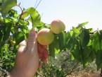 Aumenta en un 20% la demanda de frutas y hortalizas ecológicas en Alemania