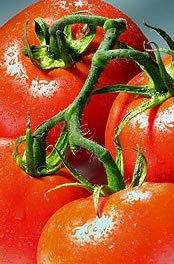 Aumenta la superficie y el número de operadores de Agricultura Ecológica