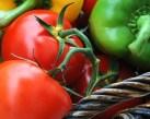Adaptar variedades de hortalizas a la agricultura ecológica