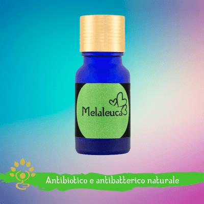 Olio essenziale di Melaleuca