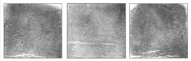 Three types of fingerprints: loop, whorl, and arch.