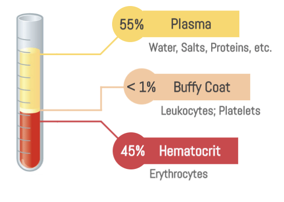 Components of blood by percentage