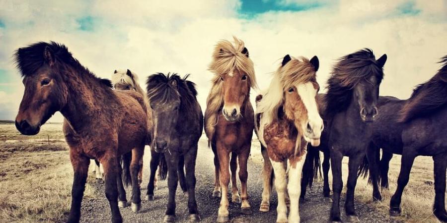 雜色馬和人類神經病變有何關聯?